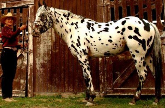J Bar K Horse Ranch Rockin 39 H Appaloosas